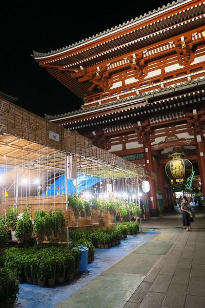 浅草寺のほおずき市