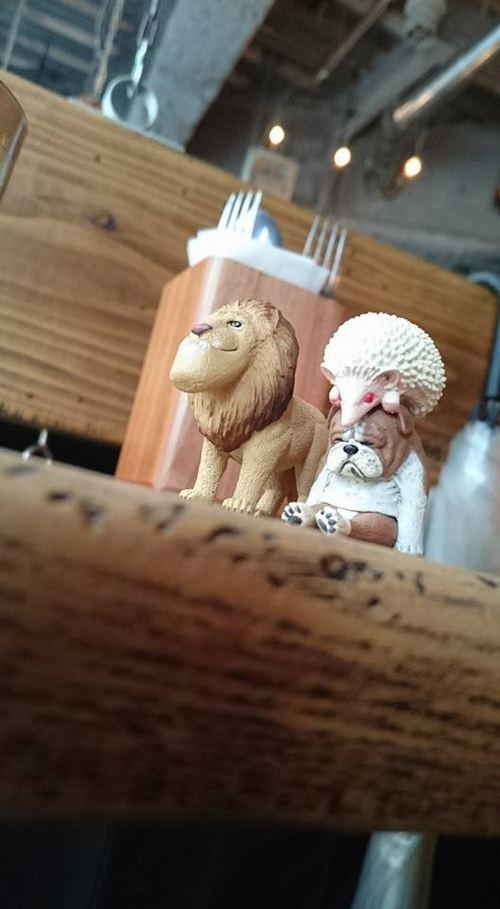【日常】 ライオンキング