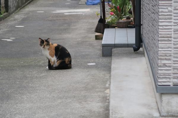 ペリーロード近くには猫がいっぱい