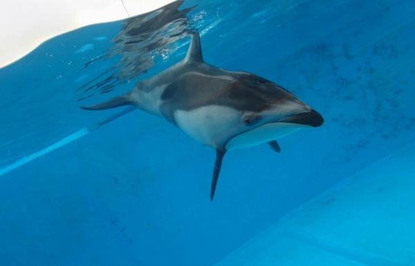 水中のイルカがこんなにキレイに撮れる