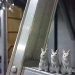 【日常】 シャクレルプラネット ウサギ再び編・続