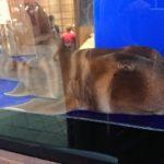 【日常】ネコザメって本当に毒持ってるの?