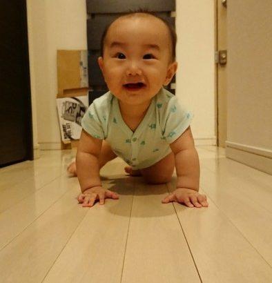 【育児】はいはいを完全に習得!!