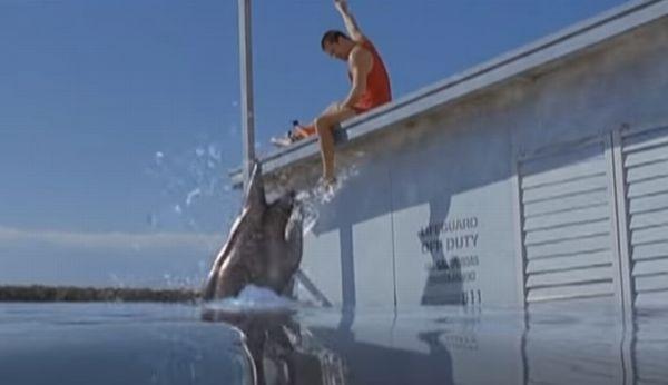 愛すべきサメ映画