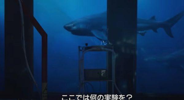 オオメジロザメが登場するサメ映画