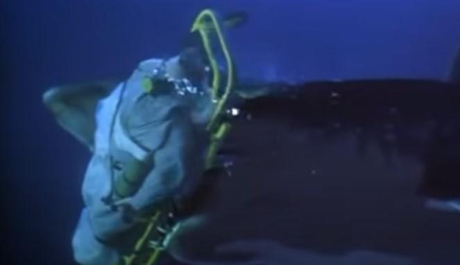 ディープブルーのアオザメ