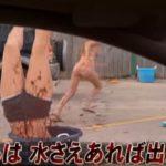 【映画】ゴースト・シャーク