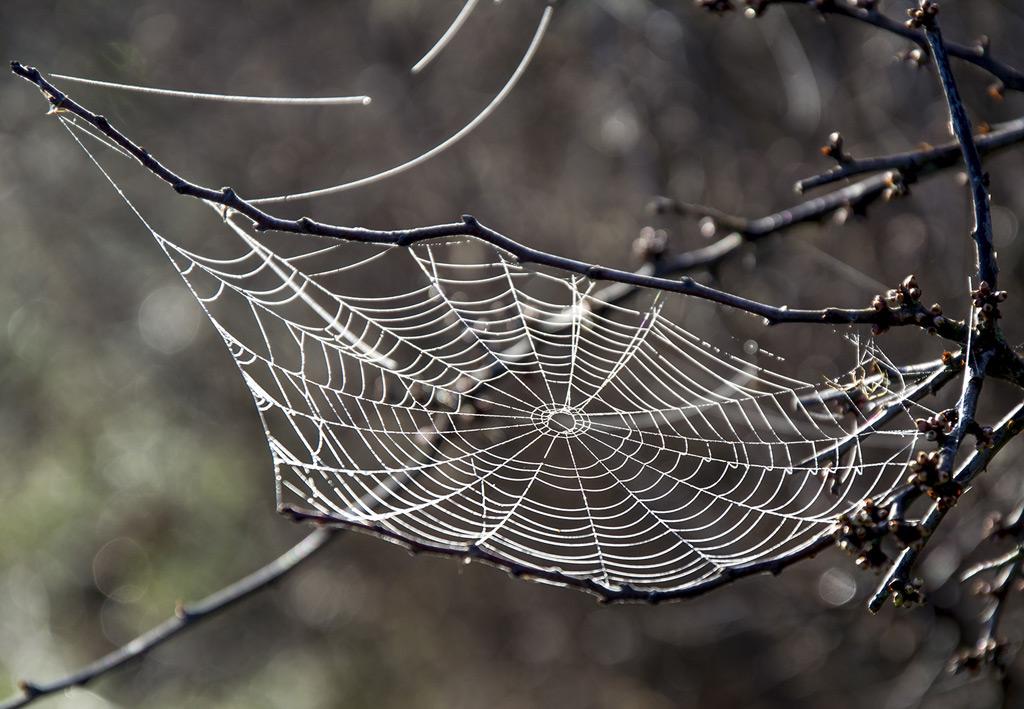 【演劇】 さて、そろそろ「螺旋と蜘蛛」の準備を