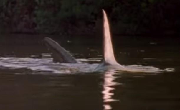 B級サメ映画