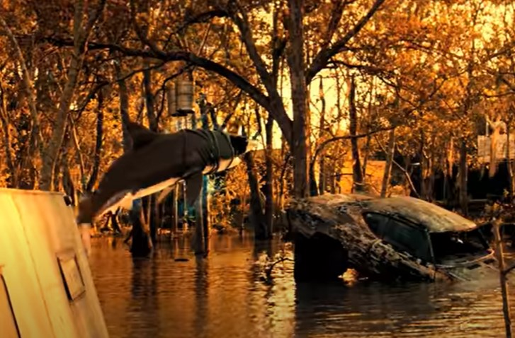 サメが吊り上げられる