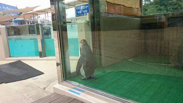 オウサマペンギンの哀愁漂う後姿